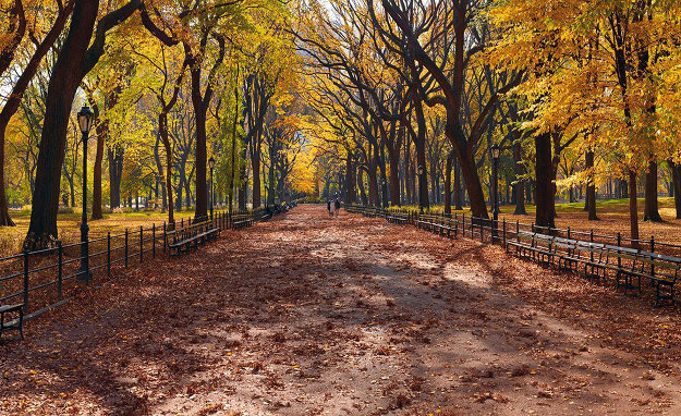 Central Park (Manhattan, NY) 1.5M Huge Panorama by Peter Lik