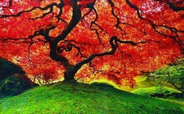 Tree of Life (Oregon) 2M Super Huge Panorama - Peter Lik
