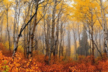 Autumn Mist Panorama - Peter Lik