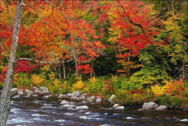 A Quiet Moment AP Panorama by Peter Lik