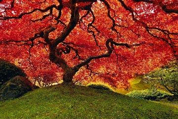 Tree of Life  Panorama - Peter Lik