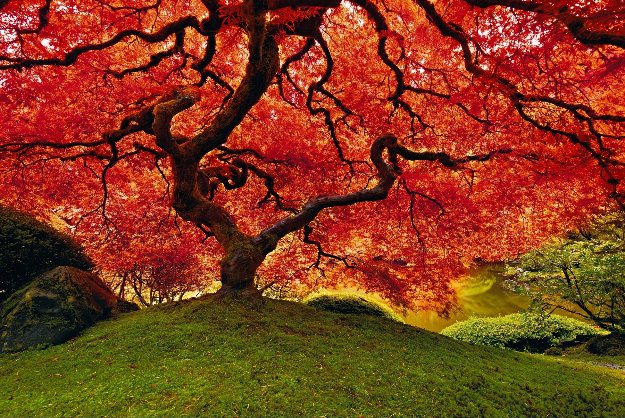 Tree of Life  Panorama by Peter Lik