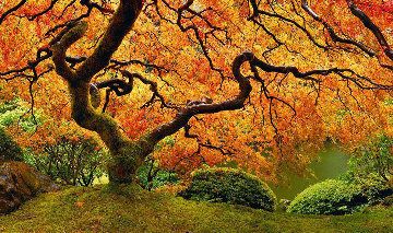 Tree of Zen Panorama - Peter Lik