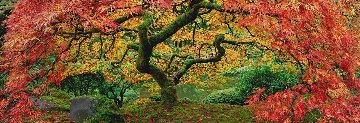 Autumn Spirit 2M Super Huge  Panorama - Peter Lik