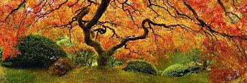Tree of Zen 2M  Huge Panorama - Peter Lik