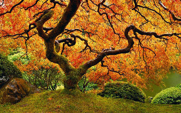 Tree of Zen 2M Super Huge Panorama - Peter Lik