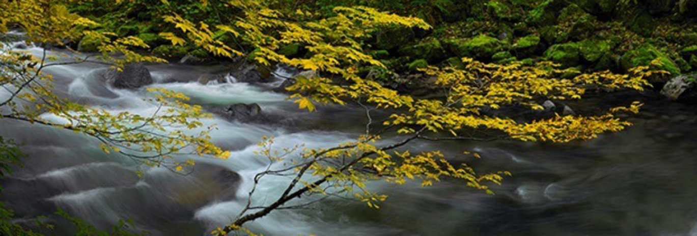 Forest Dreams (Small edition) 2M Super Huge Panorama by Peter Lik