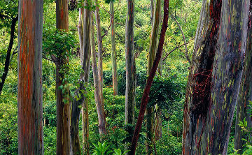 Painted Forest Panorama - Peter Lik