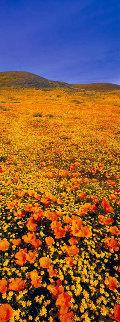 Rainbow Fields Panorama by Peter Lik