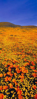 Rainbow Fields Panorama - Peter Lik