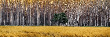 Golden Silence   Panorama - Peter Lik