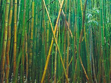 Bamboo Panorama - Peter Lik