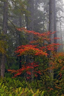 Splash of Red Panorama - Peter Lik