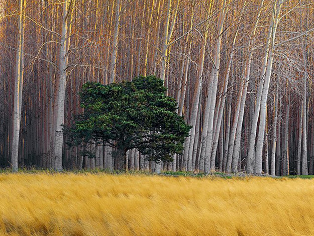 Golden Silence Panorama by Peter Lik