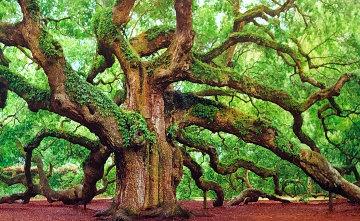 Tree of Hope 1.5M Huge! Panorama - Peter Lik