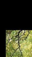 Tree of Serenity 2M Huge  Panorama by Peter Lik - 2