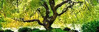Tree of Serenity 2M Huge  Panorama by Peter Lik - 0