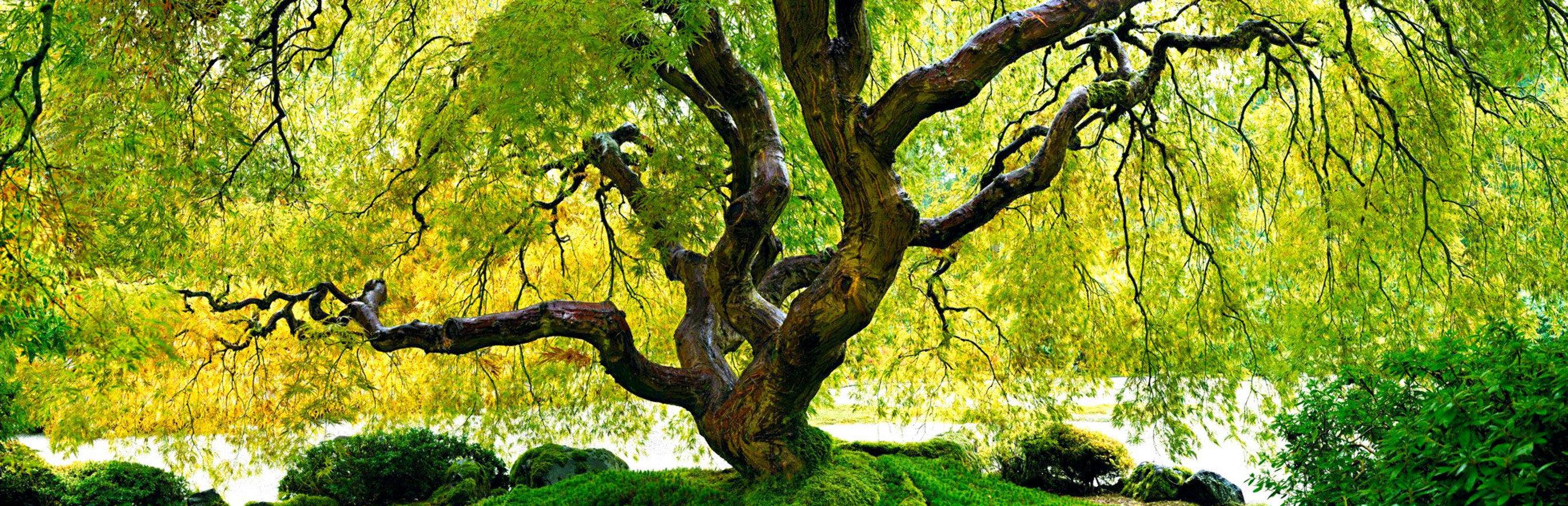 Tree of Serenity 2M Huge  Panorama by Peter Lik