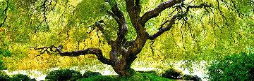 Tree of Serenity Panorama by Peter Lik