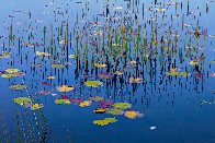 Lilies of the Pond Panorama by Peter Lik - 0