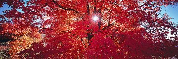 Morning Star 1.5M Huge! Panorama - Peter Lik