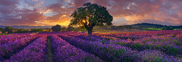 Morning in France AP Panorama - Peter Lik