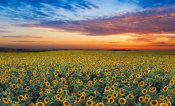 Summer Dreams Panorama by Peter Lik