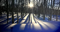 Sunlit Birches Panorama by Peter Lik - 0
