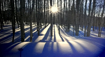 Sunlit Birches Panorama by Peter Lik
