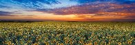 Summer Dreams  Panorama by Peter Lik - 0
