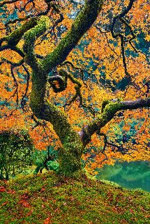 Tree of Beauty Panorama by Peter Lik