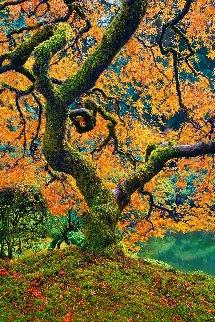 Tree of Beauty 1.5M Huge! Panorama - Peter Lik