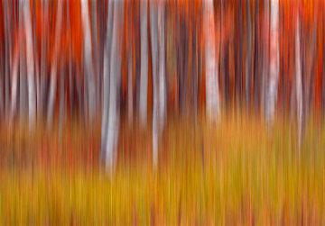 Vibrance Panorama by Peter Lik