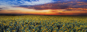Summer Dreams 1.5M Huge! Panorama - Peter Lik