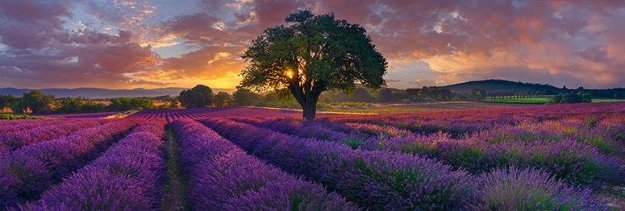Morning in France by Peter Lik