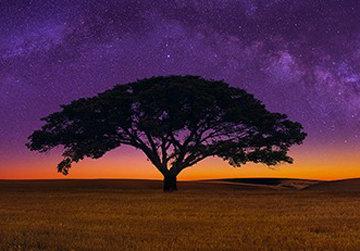 Celestial Dreams  Panorama - Peter Lik