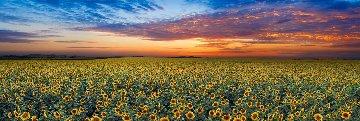 Summer Dreams Panorama - Peter Lik