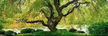 Tree of Serenity Panorama - Peter Lik