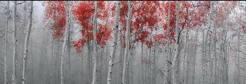 Scarlet Moods Panorama by Peter Lik