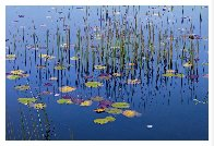 Lilies of the Pond 1,5m Panorama by Peter Lik - 1