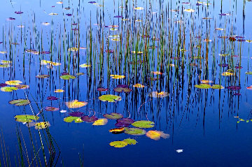 Lilies of the Pond Panorama by Peter Lik