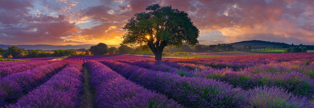 Morning in France Panorama by Peter Lik