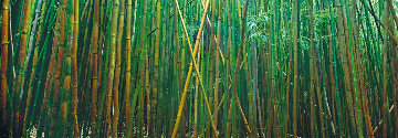 Bamboo (Pipiwai Trail, Hana, Hawaii) 1.5M Huge! Panorama - Peter Lik