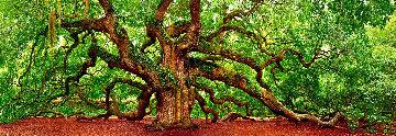 Tree of Hope 1.5M Huge Panorama - Peter Lik