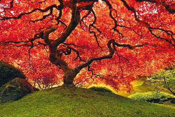 Tree of Life (Oregon) 1.5M Huge! Panorama - Peter Lik