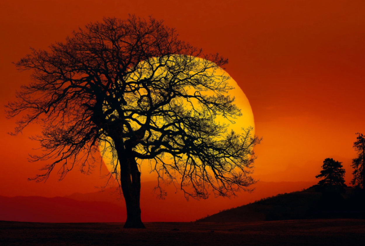 In Search of the Sun (Centerville, Washington) Panorama by Peter Lik