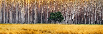 Golden Silence 1.5M Huge Panorama - Peter Lik