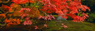 Autumns Flame 1.5M  Huge Panorama - Peter Lik