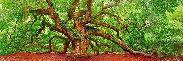 Tree of Hope 1.5M Huge Panorama - Peter Lik