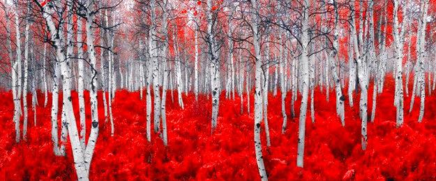 Scarlet Moods 1.5M  Huge Panorama by Peter Lik